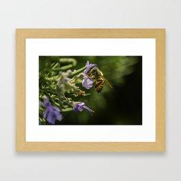 Bee at work Framed Art Print
