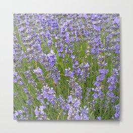 french lavender field IIX Metal Print