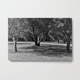 Black and white forest landscape Metal Print