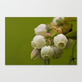 Sweet Blue Cluster Canvas Print