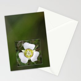 Mariposa Lily Stationery Cards