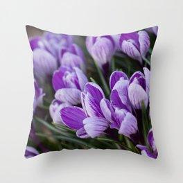 Crocus chrysanthus Throw Pillow