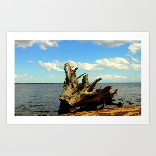 Metung ~ Lake King Art Print
