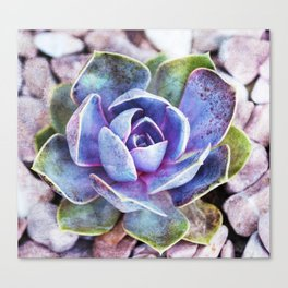 Colorful cactus Canvas Print