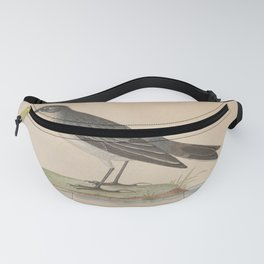 Vintage Print - A History of the Birds of Europe (1859) - Water Pipit Fanny Pack