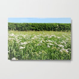 Yarrow meadow and hedge Metal Print
