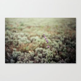 lonely lavender analog Canvas Print