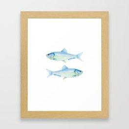 Blue Herrings Framed Art Print