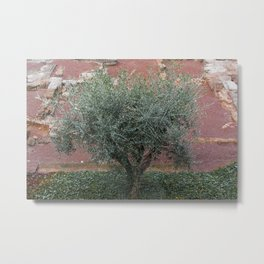 Rome, Olive tree in the Park Metal Print