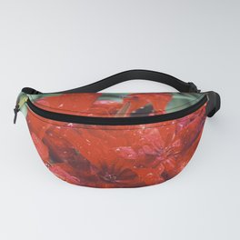 After rain or Early morning? Fanny Pack