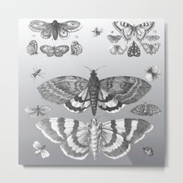 A Lepidopterist delight Metal Print