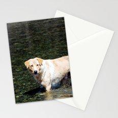 Mongolian Dog Stationery Cards