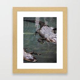 Alligators Framed Art Print