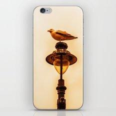 Larus iPhone & iPod Skin