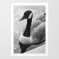 Gooseneck Art Print