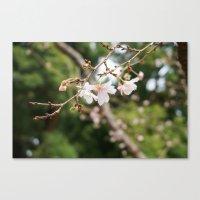 sakura Canvas Prints featuring sakura by artsimo