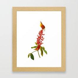 Great Carolina Wren Framed Art Print