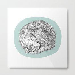 Curled Cat Metal Print
