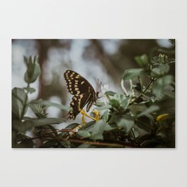 in the quiet moments Canvas Print
