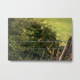 Wren Songbird Bird on a Wire (Troglodytes) Metal Print