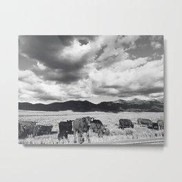 Loose Cattle Metal Print