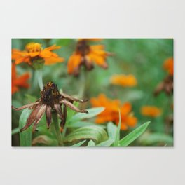 Dead or Alive Canvas Print