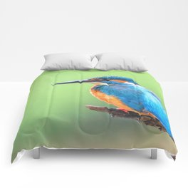 Common Kingfisher (Alcedo atthis) Eurasian Kingfisher Bird sitting on a Branch Comforters