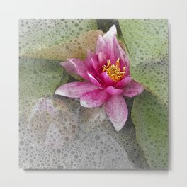 soft water lily IV Metal Print