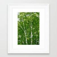 birch Framed Art Prints featuring Birch Trees by Tru Images Photo Art