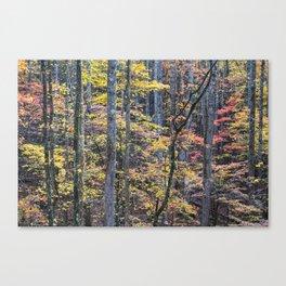 Fall Woodscape 03 Canvas Print