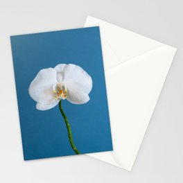 A Single Blossom Stationery Cards