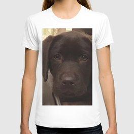 Cute Lab Puppy T-shirt
