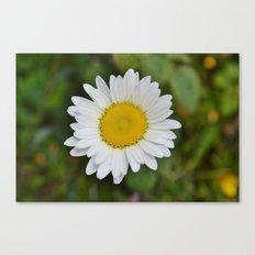 Daisy, Pure & Simple Canvas Print