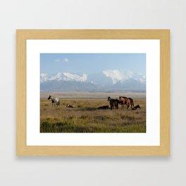 Wild horses between Sary Tash and Sary Mogul, Kyrgyzstan Framed Art Print