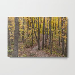 Fall on the Minnesota North Shore's Superior Hiking Trail Metal Print