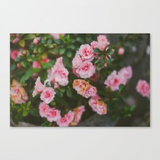 Small Roses Canvas Print