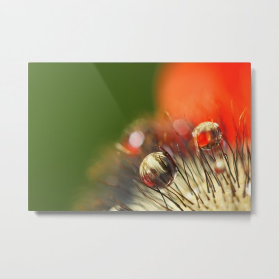 Poppy Drop Abstract Metal Print