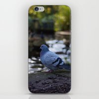 pigeon iPhone & iPod Skins featuring Pigeon by Elliott Kemp Photography