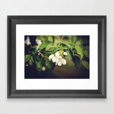 spring blossom. Framed Art Print