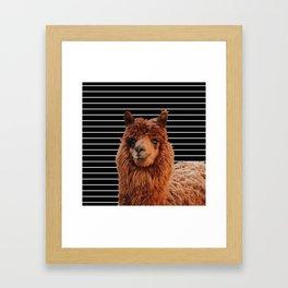 Llama Drama Framed Art Print