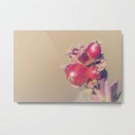 Sunny red berries #2 Metal Print