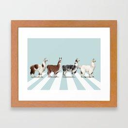 Llama The Abbey Road #1 Framed Art Print