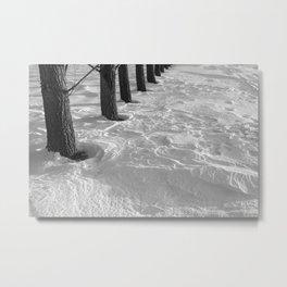 Row of Poplar Trees in Drifted Snow Metal Print