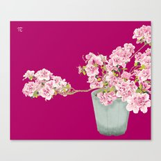Heavenly Blossom on Pink Canvas Print