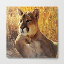 The Golden Thinker 🐾 Cougar 🐾 Metal Print