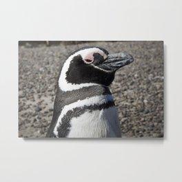 Penguins #4 Metal Print