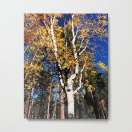 Aspen Forest Autumn Leaves Scene Grand Canyon North Rim Metal Print