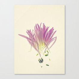 Love me, Dhalia - Botanical Print Canvas Print