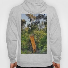 If A Tree Fell In The Woods Hoody