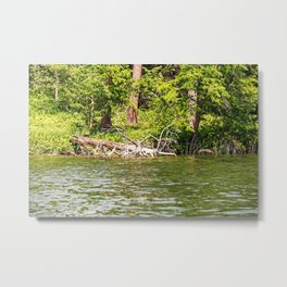 Lake Itasca - Minnesota, USA 12 Metal Print